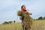カンボジア農業支援.jpg