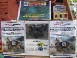 日本ウミガメ協議会5.jpg
